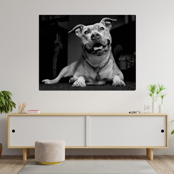Quadro/Tela personalizado com sua foto do seu cão